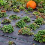 100 m² Tapis de sol Film anti-mauvaises herbes Film de paillage 100 g largeur 1,65 m de la marque Aquagart image 3 produit