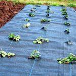 100 m² Tapis de sol Film anti-mauvaises herbes Film de paillage 100 g largeur 1,65 m de la marque Aquagart image 4 produit