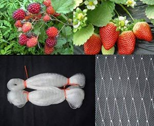 2.5 cm en maille Translucide Plus épais Filet en nylon, anti Filet anti-oiseaux, invisible Filet de piscine, jardin, Plante Filet de fruits, protection contre les animaux domestiques rongeurs Oiseaux Translucent: 3m x 10m de la marque HELE Life image 0 produit
