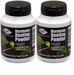 2x Doff® Poudre d'hormones d'enracinement 75g–aide à New racines sur boutures et favorise la racines sain et fort de la marque Doff image 0 produit