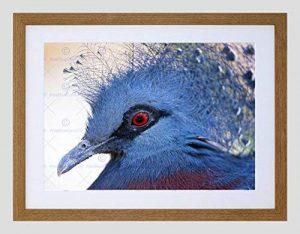 ANIMAL PHOTO BIRD VICTORIA CROWNED PIGEON FRAMED ART PRINT POSTER F12X9947 de la marque The Art Stop image 0 produit