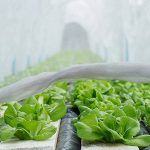 Anti-Insecte Net Fenêtre Filet Protecteur D'écran Net Anti Moustiques Légumes Fleur Jardin Verger Anti-Oiseau Anti-Insecte Net Bogue Insecte Oiseau Chasse Aveugle Pour Protéger Votre Plante Fruits Fleur (10*2.4m) de la marque iBaste image 1 produit