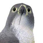Baoblaze Réaliste Aigle Leurre de Chasse Epouvantail Figurine de Décoration Jardin Protection Contre Oiseaux Rongeurs de la marque Baoblaze image 3 produit