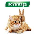 Bayer Advantage 80 Chat/Lapin 4-10 kg 6 pipettes antiparasitaires de 0,8ml de la marque Bayer image 2 produit