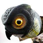 Bird-X Leurre pour effrayer les prédateurs en forme de chouette de la marque Bird-X Inc image 1 produit