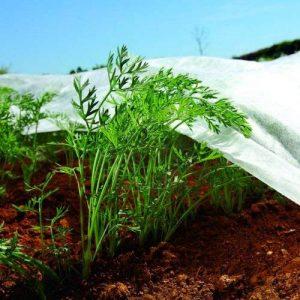 Bradas aww1732005non-tissé récolte Decker Protection anti-gel Tissu insectes réseaux, 3,2x 5m, blanc de la marque Bradas image 0 produit