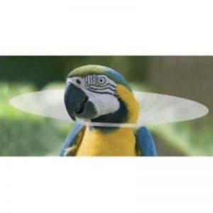 Cage à oiseaux de protection Elizabethan Cône Collier. 4tailles. La Guérison anti plumes épilation Parrot perruche calopsitte élégante cacatoès Aras, etc. de la marque JAKS image 0 produit
