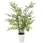 Closer To Nature P090D Plant de Bambou Japonais 68,6 cm de la marque Closer To Nature image 4 produit