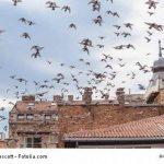 eloigner les pigeons TOP 7 image 2 produit