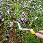 Evilandat Désherbeur Affûté Bon Outil de Jardinage Manuel avec Poignée TPR pour les Plantes de la marque Evilandat image 4 produit