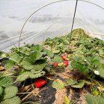 filet anti insectes jardinage TOP 11 image 3 produit