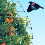 Filet Anti Oiseaux 2 X 6m - Filet Protection Contre Oiseaux pour les Jardins et les Arbres Fruitiers de la marque Aspectek image 3 produit