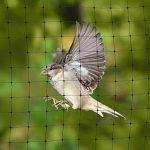 Filet Anti Oiseaux 2 X 6m - Filet Protection Contre Oiseaux pour les Jardins et les Arbres Fruitiers de la marque Aspectek image 4 produit