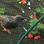 Filet anti-oiseaux 4m x 10m Vert Jardin anti Oiseau Filet de bassin pour plante Filet de protection pour Pest Control, Pea Fruits Filet 1.5x 1.5cm trous 4m X 10m de la marque KINGLAKE image 2 produit