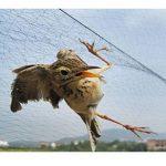 Filet anti-oiseaux pour jardin arbre fruitier 4 dimensions Filet de bassin protection de plant légumes Suyi de la marque Hi Suyi image 1 produit