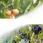 Filet anti oiseaux pour potager, jardin etc vert vert 4m x 6m de la marque CommercioEuropa image 1 produit