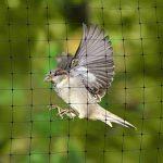 filet anti oiseaux TOP 5 image 4 produit