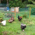 filet de clôture pour jardin TOP 4 image 1 produit