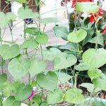 Filet de jardin, support pour plantes grimpantes Net 10*10cm en maille filet pour plante, animal, végétal protection 3.6x1.8m 3.6x1.8m de la marque GoodFaith image 4 produit