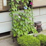 Filet de jardin, support pour plantes grimpantes Net 10*10cm en maille filet pour plante, animal, végétal protection 3.6x1.8m 3.6x1.8m de la marque GoodFaith image 2 produit