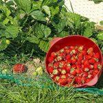 Filet de protection contre les oiseaux 8m x 8m Fruits coton Filet légumes de la marque Aquagart image 2 produit