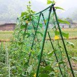 Filet de Support pour Plantes Légumes et Fruits Grimpantes en Nylon 1.8 * 3.6m de la marque HOGAR AMO image 4 produit