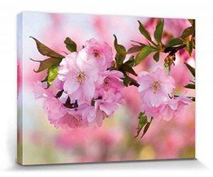 filet pour cerisier TOP 2 image 0 produit
