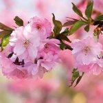 filet pour cerisier TOP 2 image 1 produit