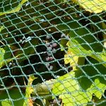 filet pour cerisier TOP 7 image 1 produit