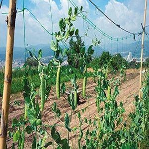 Filet pour plantes grimpantes m 2x10 de la marque BIACCHI ETTORE SRL image 0 produit