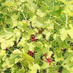 filet pour protéger arbre fruitier TOP 1 image 3 produit