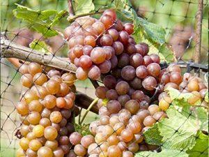 filet pour protéger arbre fruitier TOP 3 image 0 produit