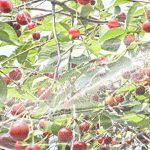 fongicide pour arbres fruitiers TOP 7 image 3 produit