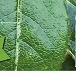 fongicide pour rosiers TOP 4 image 1 produit