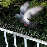 Gardigo - 5 Mètres Spirale Effaroucheurs Répulsif Anti-Pigeons, Oiseaux de la marque Gardigo image 1 produit