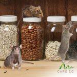 Gardigo 62343 - Lot de 10 Pièges - Tapettes à souris | Écologique et Réutilisable (10 pièces) de la marque Gardigo image 4 produit