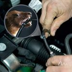 Gardigo 78405 Répulsif Ultrason pour voiture, compartiment moteur | Branchement sur la batterie d'automobile 12 V | Repeller repousse anti-martres, fouines, ratons laveurs et rongeurs de la marque Gardigo image 2 produit