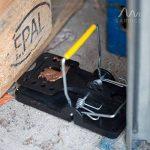 Gardigo Lot de 5 Pièges à rats, Tapettes à souris | Écologique et Réutilisable (5 pièces) de la marque Gardigo image 4 produit