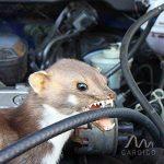 Gardigo Répulsif Ultrason pour voiture, garage, maison   Repeller pour automobile anti-martres, fouines, renards, ratons laveurs et rongeurs   Repeller pour véhicule repousse les animaux nuisibles de la marque Gardigo image 4 produit