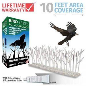 gel répulsif oiseaux TOP 2 image 0 produit