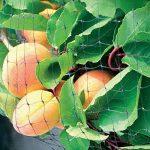 GOTOTOP 1pc/2pc/4pcs Filet de Protection Jardin Anti-oiseaux pour Jardin, Arbres Fruitiers, Légumes et Plantes, Bassin d'Eau - 4m x 10m (1pc) de la marque GOTOTOP image 4 produit