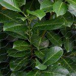 Grillage Métallique pour Cloture Maillage Hexagonal : 25x25mm Longueur 25m Hauteur 75cm Clôture pour animaux et plantes 0.9mm avec Couche en PVC Verte de la marque NIEDERBERG METALL image 4 produit