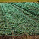 Haga® Filet anti-oiseaux coton Protection Protection contre fraß Oiseaux dans 10m BR. (au mètre) de la marque HaGa® image 3 produit