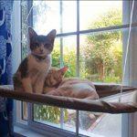 Hamac 20kg de chat Animal domestique Contactes fenêtre monté Hamac Perchoir Coussin de siège Lit étagère à suspendre Idéal pour plusieurs Chats amovible à la maison–55*35cm (Cadeau jouet Poisson) de la marque Homesupplier image 3 produit