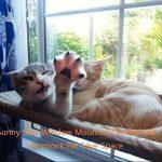 Hamac 20kg de chat Animal domestique Contactes fenêtre monté Hamac Perchoir Coussin de siège Lit étagère à suspendre Idéal pour plusieurs Chats amovible à la maison–55*35cm (Cadeau jouet Poisson) de la marque Homesupplier image 2 produit