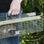 Havahart 1025 Piège cage pour animaux vivants à double entrées Petite taille de la marque Havahart image 3 produit