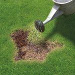 herbicide pour gazon TOP 1 image 1 produit