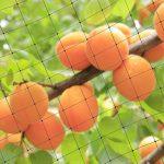 Hotgod 25'X50' Filet anti-oiseaux arbres fruitiers en maille filet de protection Taille Bloc de poisson d'insectes nuisibles volaille Volière Pen de la marque Hotgod image 2 produit