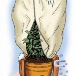 housse de protection plantes TOP 3 image 4 produit