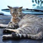 ISOTRONIC Anti oiseaux Anti-animaux mobile oiseau ver pilote colombe protection pigeon de défense contre animaux comme chats chiens fouines ratons laveurs réglable individuellement de la marque ISOTRONIC image 2 produit